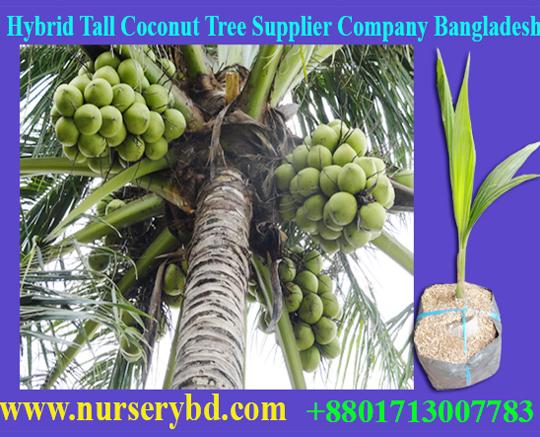 Aromaticcoconut :: Bangladesh Hybrid Nursery & Seeds Company