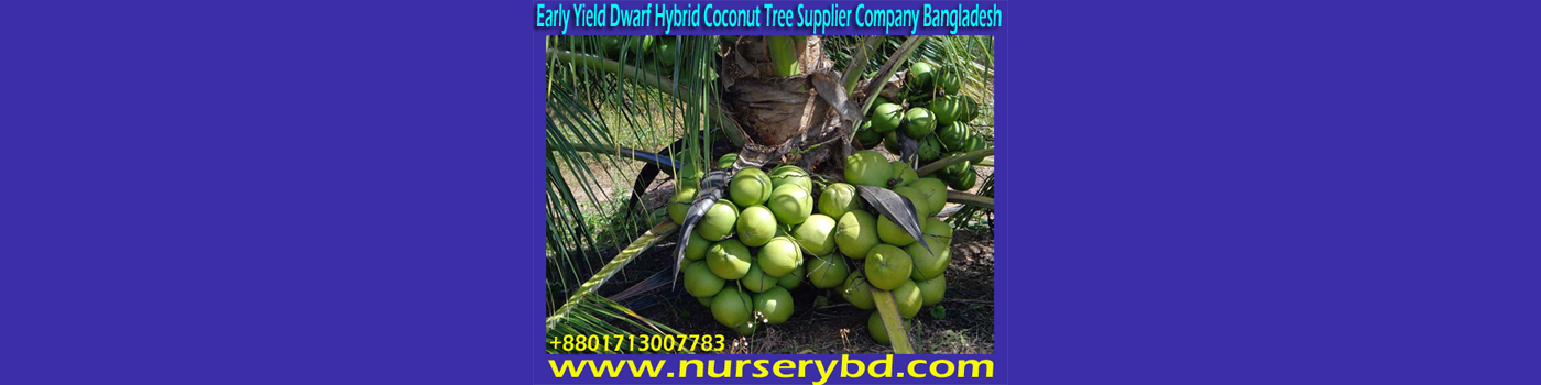 Green Xiem Coconut Seedling Plant, Aromatic Coconut Seedling Plant Supplier Company in Bangladesh, Red Aromatic Coconut Seedling Plant Supplier Company in Bangladesh, Green Aromatic Coconut Seedling Plant Supplier Company in Bangladesh, Hybrid Coconut Seedling Plant Supplier Company in Bangladesh, Hybrid Coconut Seed Tree Supplier Company in Bangladesh
