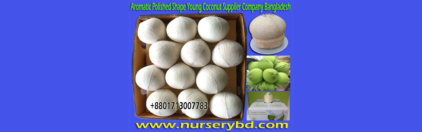 Dwarf Aromatic Coconut Seedling Tree Manufacturer, Dwarf Aromatic Coconut Seedling Plant Manufacturer, Dwarf Aromatic Coconut Seedlings Plants Manufacturers, Dwarf Aromatic Coconut Seedlings Plants Manufacturers in Bangladesh, Dwarf Aromatic Coconut Seedlings Plants Manufacturers in Thailand